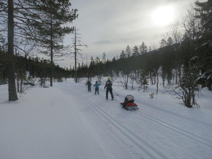 Kalven runt, längd, längdspår, cross country, skiing, Tandådalen