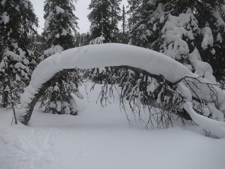 Snö, snöfall, snödjup, Kalven runt, skidåkning, åka skidor, Sälen