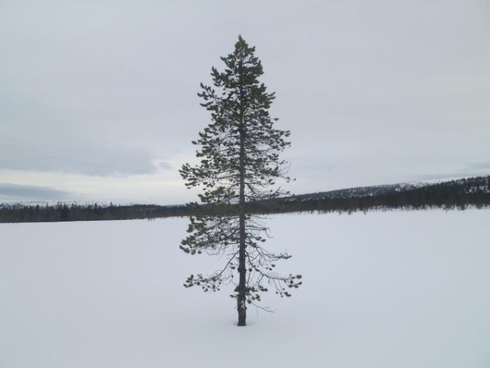 Fjäll, fjällnatur, Sälenfjällen, Scandinavian Mountains, Kalven runt, Tandådalen